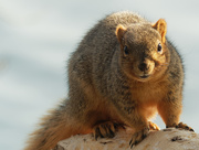 27th Mar 2019 - squirrel