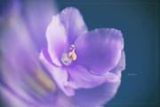 27th Mar 2019 - A Violet Violet