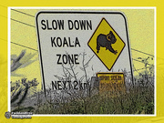 27th Mar 2019 - but do they slow down?