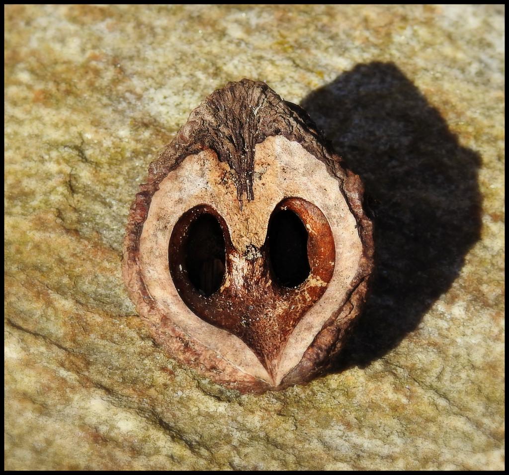 Squirrels Heart Walnuts by ddw