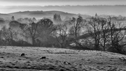 28th Mar 2019 - More March Morning Mist
