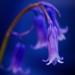 Rainbow Blue #5 by fbailey