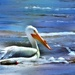 Pelican in Iowa by lynnz