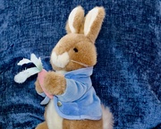 29th Mar 2019 - Peter Rabbit