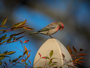 29th Mar 2019 - finch
