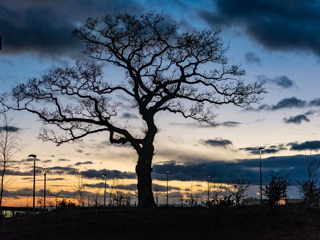 Evening Tree by dorsethelen
