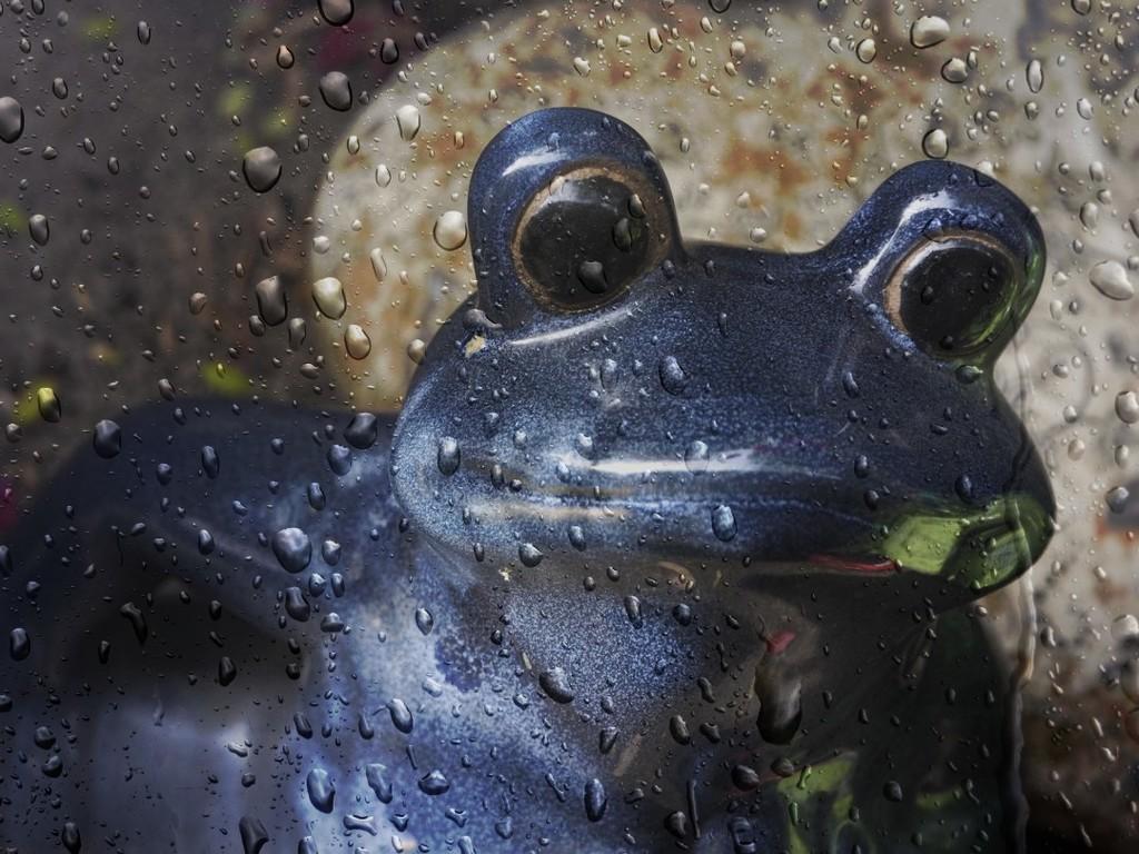 Indigo and In di Rain by ethelperry