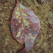 30th Mar 2019 - Another leaf
