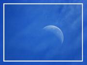 29th Mar 2019 - Blue Moon