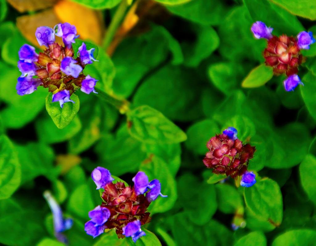 Petite purple petals by kiwinanna