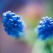 raibow blue