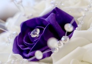 30th Mar 2019 - Purple Flower