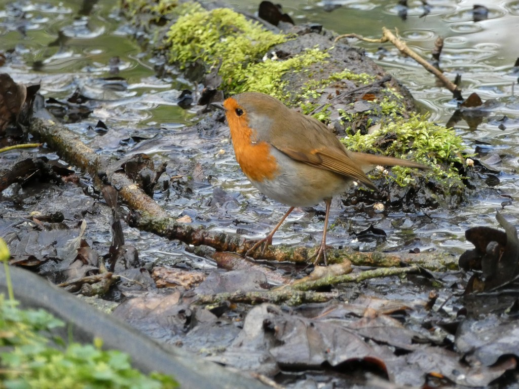 Looking for bugs in the mud by julienne1