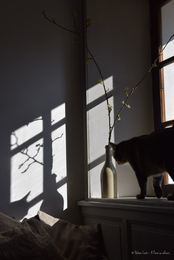 sunny by parisouailleurs