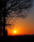 31st Mar 2019 - Sun arise come in the morning...
