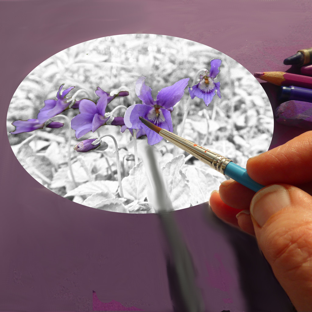 Painting violets by shannejw