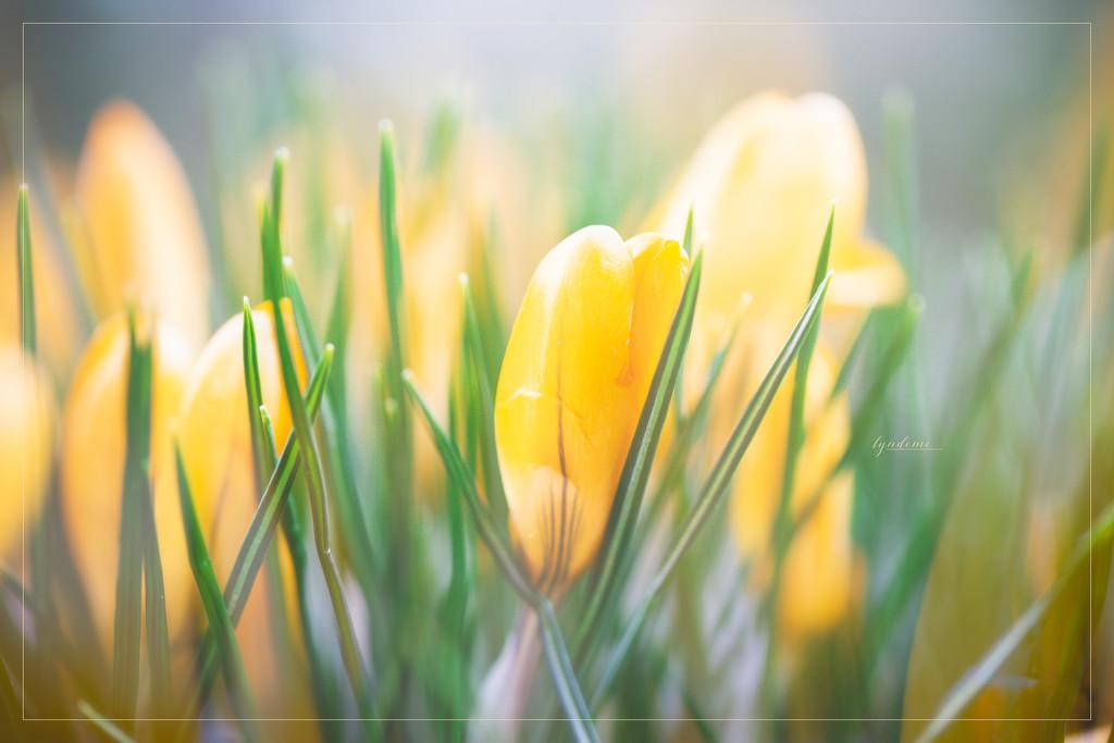 Beautiful Spring by lyndemc