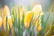 30th Mar 2019 - Beautiful Spring