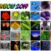 Rainbow 2019 calendar