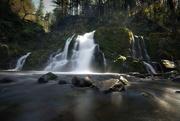 31st Mar 2019 - Forest falls