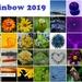 Rainbow 2019