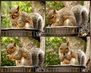1st Apr 2019 - Squirrel enjoying his snack