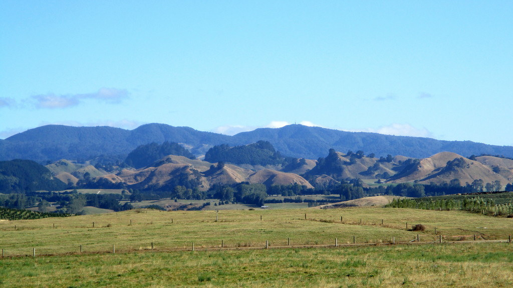Typical New Zealand countryside on the way to Lake Taupo by 777margo
