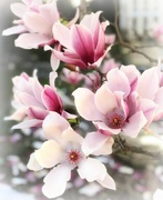 1st Apr 2019 - Blossom By Blossom