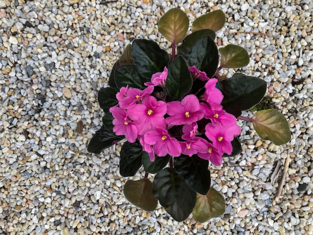 More Blooms by loweygrace
