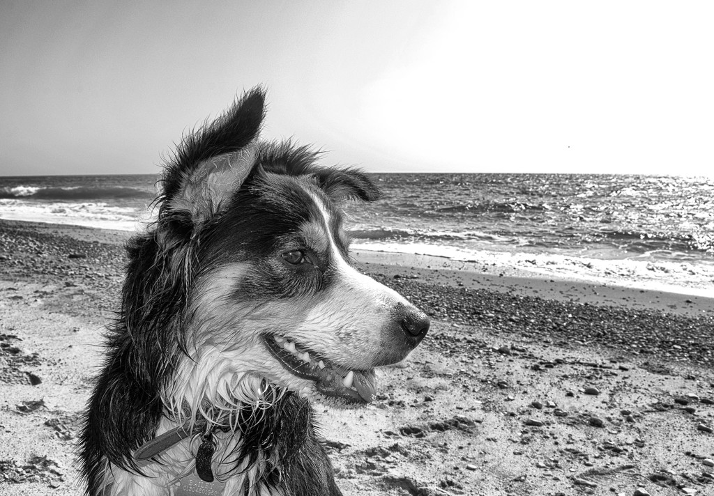 Sea Dog by fbailey