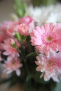 31st Mar 2019 - Mothers Day Flowers