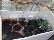 1st Apr 2019 - In the Greenhouse