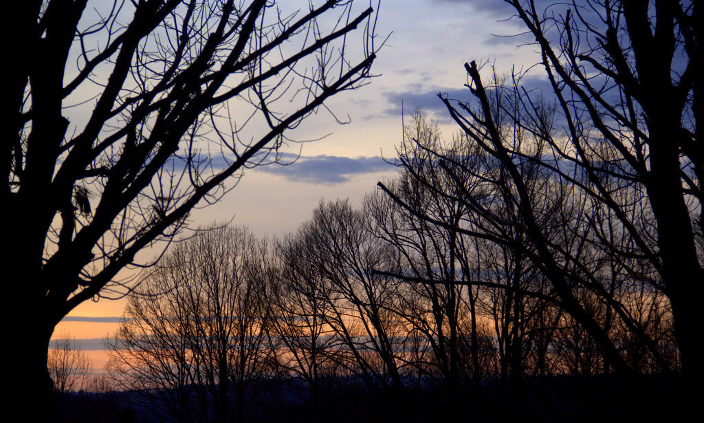 Trees Awaiting Leaves by calm