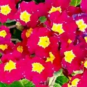 1st Apr 2019 - Pop of colour