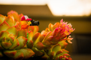 19th Mar 2019 - (Day 34) - Succulent Blooms