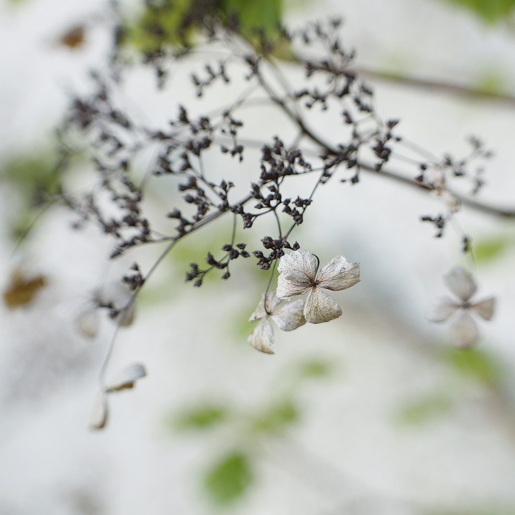 April 2nd by motherjane