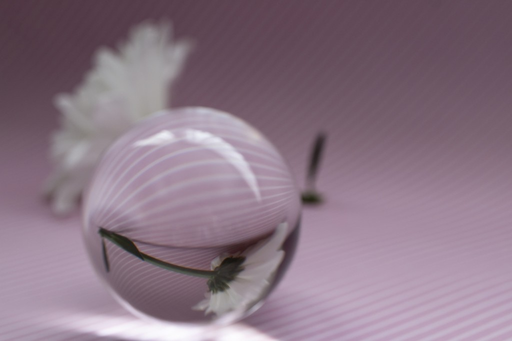 Lensball for 30 days 2/30 by bizziebeeme