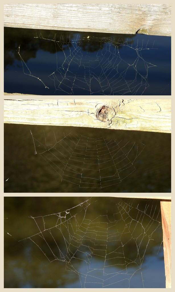 Spiderwebs by homeschoolmom
