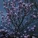 Magnolia Burst by phil_sandford