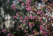 1st Apr 2019 - garden's colors