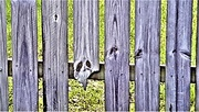 3rd Apr 2019 - Old Fence ~