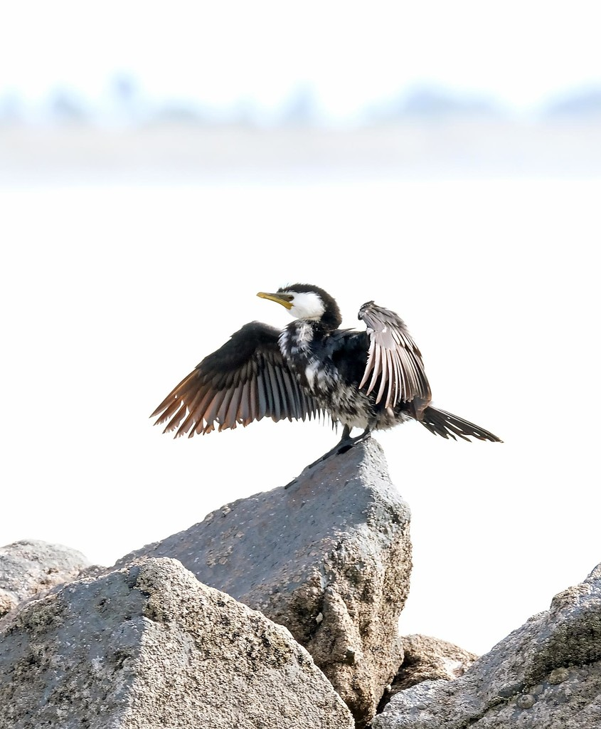 King of the Rock by maureenpp