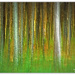 Golden light through the tree's by julzmaioro