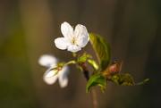 3rd Apr 2019 - blossom