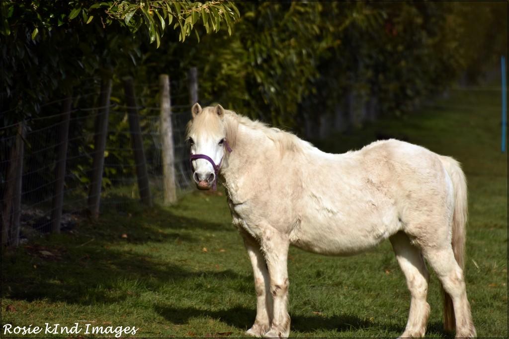 Lovely little pony by rosiekind