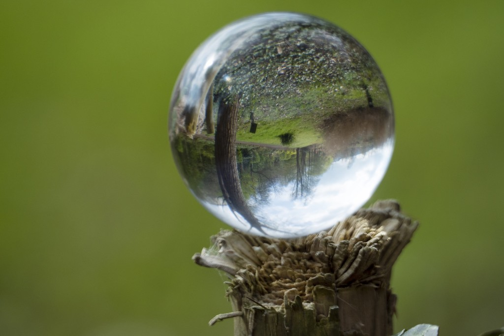 Lensball for 30 days 3/30 ( Take 2) by bizziebeeme