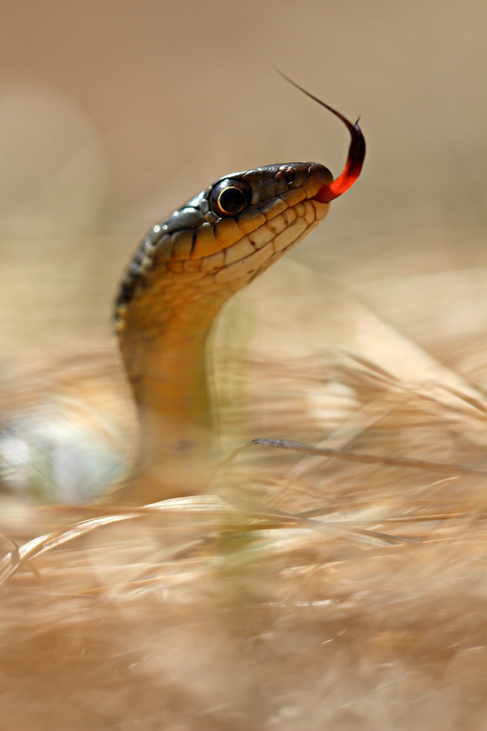 First Snake of Spring by juliedduncan