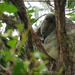 ala naturale by koalagardens