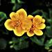 Spring by madeinnl