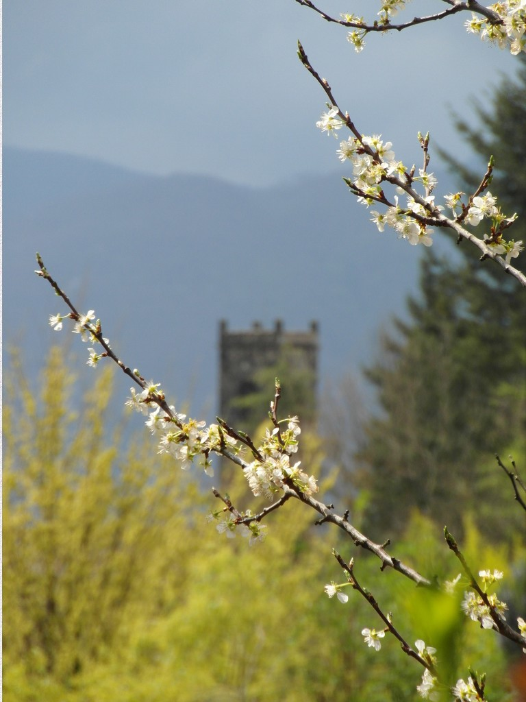 Blossoming Tower by will_wooderson